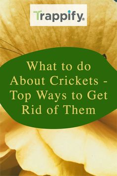 Read this article to learn why crickets like your home, how to get rid of crickets, and how to keep them from coming back. Indoor Vegetable Gardening, Organic Gardening Tips, Hanging Plants, Indoor Plants, Getting Rid Of Crickets, Do You Really, Pest Control, House Plants, Patio