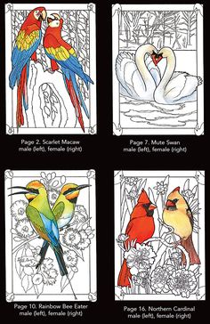 Beautiful Birds in Mated Pairs Stained Glass Coloring Book Dover Publications Coloring Pages To Print, Colouring Pages, Adult Coloring Pages, Coloring Books, Stained Glass Birds, Stained Glass Patterns, Bird Patterns, Mosaic Patterns, Bird Template