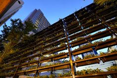 Ad Lib Hotel Bangkok - now a stunning vertical garden with ivy down to the ground
