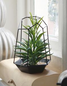 Browsehouse Open Geometrisch Terrarium van Zwart Metaal. Ideaal voor plantjes, maar ook heel leuk als kleine opberger!