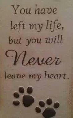 You have left my life, but you will NEVER leave my heart - RIP all of my beloved cats who have gone to the Rainbow Bridge! All Dogs, I Love Dogs, Puppy Love, Yorkies, Chihuahuas, Cotton De Tulear, Pet Loss Grief, Loss Of Pet, Petit Basset Griffon Vendeen