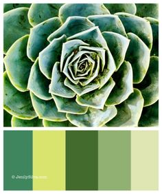 Succulent - Green Color Palette