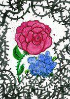 Rose by SoraShiranui