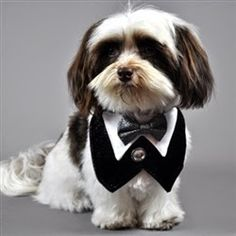 http://4.bp.blogspot.com/-dFA5s06jiYo/U2pgPSsedXI/AAAAAAACNUs/jpoPUkNMUtQ/s1600/casamento_cachorros_roupas_acessorios-11.jpg