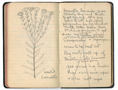 Thomas Edison's notebook. Notebook Stories: A Blog About Notebooks, Journals, Moleskines, Blank Books, Sketchbooks, Diaries and More