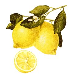Lemons ~ Keep Lemon Juice Spray Handy  Fill an inexpensive spray bottle (dollar store purchase) with lemon juice and keep it in the refrigerator. Use it to spritz onto cut produce to keep fresh and crisp. Also great for spritzing as a finishing touch on cooked vegetables, chicken, and salads.  By Regan from Houston, TX  Related: Cooking With Lemon Juice