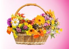 Find Beautiful Flowers Basket Isolated On White stock images in HD and millions of other royalty-free stock photos, illustrations and vectors in the Shutterstock collection. White Stock Image, White Image, Flower Basket, My Flower, Stock Foto, Table Centers, Centre Pieces, Table Centerpieces, Happy Mothers Day