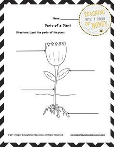 Fall Science Journals Kindergarten Plants and School