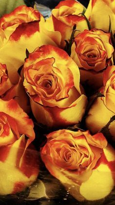 Red And Yellow Roses, Wedding Flowers, Plants, Plant, Planets, Bridal Flowers