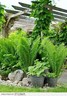 stone, ferns, pergola, hostas, planters
