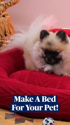Cute Little Animals, Cute Funny Animals, Cute Dogs, Pet Beds, Dog Bed, Gato Crochet, Fun Diy Crafts, Diy Stuffed Animals, Dog Care