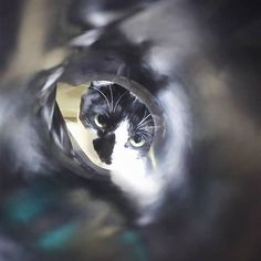 おはようございます🙋 連休も今日までになってしまいましたね😓楽しい1日をお過ごし下さいヽ(´ー` )ノ めちゃ睨んでます😨 本日も宜しくお願いします😺🐾 #愛猫#猫#猫大好き❤️#猫好きさんと繋がりたい#はちわれ#ハチワレ仲間#ハチワレ#にゃんすたぐらむ