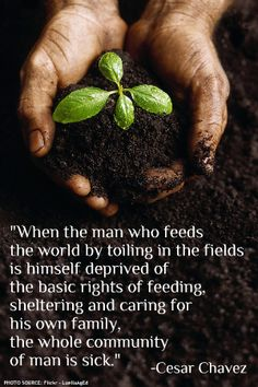 """""""When a man, who feeds the world by toiling in the fields, is himself  deprived of the basic rights of feeding, sheltering, and caring for his own family, the whole community if man is sick."""" -Cesar Chavez #quotes #sustainableAg"""