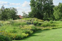 A summer walk at Hermannshof—a garden celebrating the beauty of plants and their habitats — View from Federal Twist Woodland Plants, Foliage Plants, Day Lilies, Drought Tolerant, Ecology, Botanical Gardens, Evergreen, Habitats, Perennials