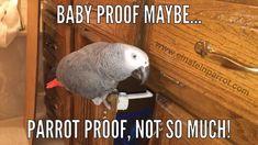 Einstein the Parrot Shame Shaming Parrots