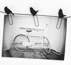 Birds on a Wire Photo Clips $8.97 set / 3 sets $8 each Hello Totally RAD website, have we met?