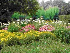 I love this garden look, flowers and more flowers