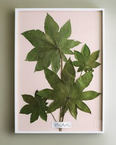 Collecting flowers/leaves to press from different places we visit. Find plants that are specific to that area and include information about the plant on the back.... make a scrapbook