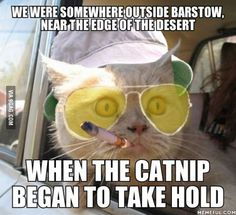 "Cat version of ""Fear and Loathing in Las Vegas"""