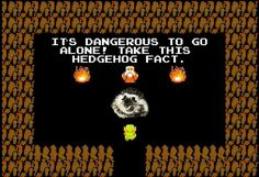 Twenty Incredible Hedgehog Facts That Will Astound You Hedgehog Facts, Hedgehogs, Mind Blown, The Twenties, Thinking Of You, The Incredibles, My Love, Hug, Change