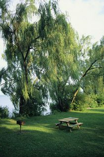 Who could be against the planting of willow trees ?