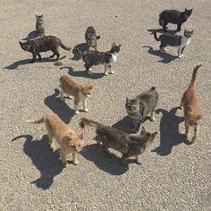 Ни хавай и так жирная Crazy Cat Lady, Crazy Cats, Cool Cats, I Love Cats, Charlie Kelly, Animals And Pets, Cute Animals, Tumblr, Fauna