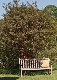 Jardim com palmeiras, pandanos e estrelítzia decorou entrada de casa - Casa.com.br