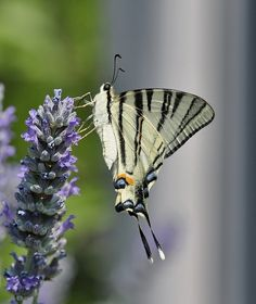 """500px / Photo """"butterfly"""" by tugba kiper"""