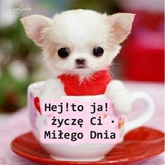 Morning Images, Morning Quotes, Good Night, Good Morning, Weekend Humor, Teacup Puppies, Reaction Pictures, Cringe, Deep Thoughts