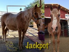 [Help request/501c3] Jackpot a recent rescue at Wildhorse Ranch Rescue needs life-saving surgery. We're almost there on the fundraiser but we could really use Reddit's magic to save this little guy's life!