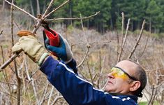 Tree lopping also refers to #tree_pruning and trimming services but more suitable for cases that do not pose advanced difficulty in completing and won't have a major impact on the health and development of a tree.