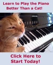 I bet you can't play piano better than me! #catsplayingpiano #cats #kitty #piano