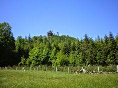 Wasgau News - Aktuelle News aus der Region: Natur und Klettererlebnis im Bärenbrunner Tal in B...