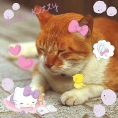 お花やイチゴ、さくらんぼなど、春をテーマにしたエフェクトがそろっています☆ポカポカの春をキティと過ごそう Spring has come! Celebrate with Hello Kitty! Get warm with flowers and fruits effects☆ Join WhatfCamera now :) http://www.wifcam.com Follow me on Twitter :) https://twitter.com/WhatIfCamera Follow me on Pinterest :) https://pinterest.com/whatifcamera/pins