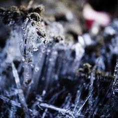 Ice Fungi