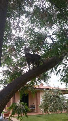 Il gatto esploratore