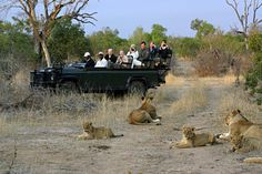 Best African Safari & Wildlife Tours