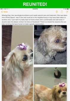 Great news! Happy to report that Pepsi has been reunited and is now home safe and sound! :)