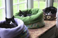 Cuddle Muffin Cat Beds Oh yeah! And they love em. ♥♥♥ Make a removal liner for easy cleaning. Cuddle Muffin Cat Beds Oh yeah! And they love em. Pet Beds, Dog Bed, Cat Room, Pet Furniture, Cat Crafts, Room Crafts, Find Pets, Diy Stuffed Animals, Crazy Cats