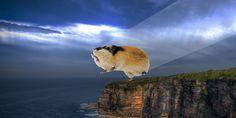 Il suicidio di massa dei lemming? Solo un tentativo di migrare