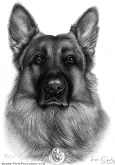 Wicked Training Your German Shepherd Dog Ideas. Mind Blowing Training Your German Shepherd Dog Ideas. German Shepherd Puppies, German Shepherds, German Shepherd Tattoo, Schaefer, Dog Paintings, Realistic Drawings, Dog Portraits, Dog Art, Mans Best Friend