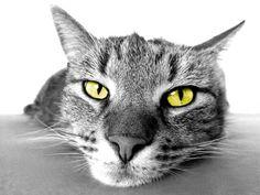 #Kostenlos #Bild #Download!   Unser Straßen Kater Stupsi Wupsi relaxt nach einem schweren Arbeitstag gern eine Runde im Bettchen. Von der Jagd erschöpft wird erst mal ordentlich gechillt.  Sie dürfen dieses Bild kostenlos herunterladen, bei Bedarf Änderungen vornehmen und es für private, sowie kommerzielle Zwecke nutzen. Über eine Verlinkung auf unsere Seite www.katzenspielzeug-selber-machen.de würden wir uns sehr freuen…