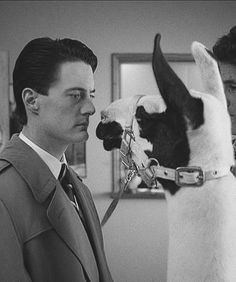 Agent Cooper comes face 2 face with a llama at David Lynch's Twin Peaks TV series.