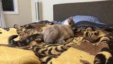 Not quite there yet #kitten #kitty #kittens #pet #pets #animal