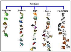 Tree Map Animals
