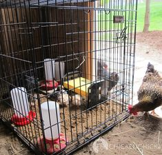 🔥 [LAST CHANCE]=>   If you are deeply in love with Easy chicken run ideas , it's not a big surprise .Many people find it hard to build a simple tractor because they don't know this simple tip,click on the link to discover it now. This will be deleted by Friday this week Chicken Chick, Chicken Lady, Chicken Runs, Chicken Coops, Chicken Tractors, Chicken Ideas, Chicken Houses, Keeping Chickens, Raising Chickens