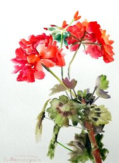 Geranium red white original wateroclor painting 12 by ORIGINALONLY, $26.00