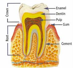 Las Vegas Dentists : Oral Health Problems