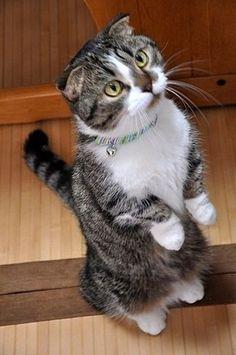 crookedlane:    〓 ねこメモ 〓: かわいい猫画像スレ