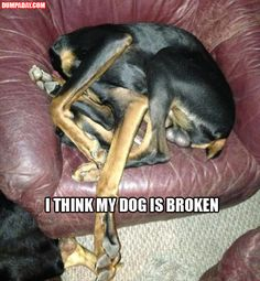 """I think my dog is broken""  My first thought: That dog should be neutered.  Second thought: Where the hell is his head?"
